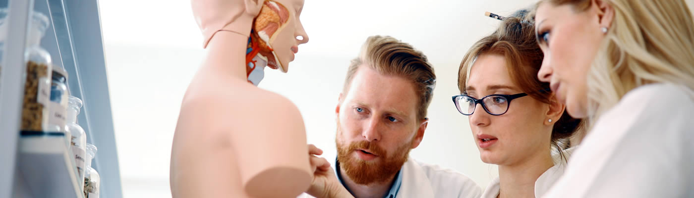 Medical students studying an anatomical model