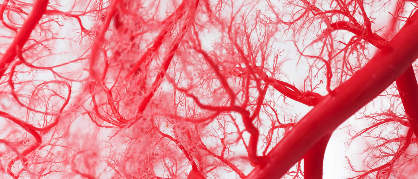 Image: Blood vessel system of a heart