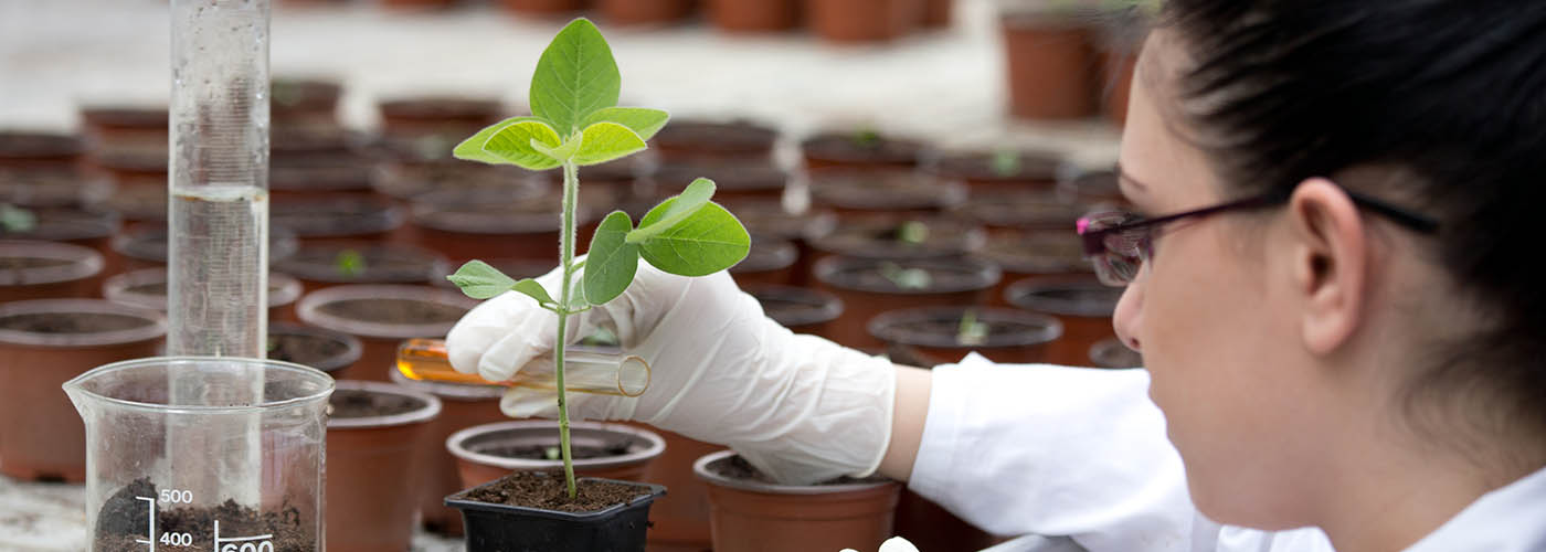 Plant science student in the lab