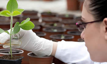 Studying plant science at The University of Manchester